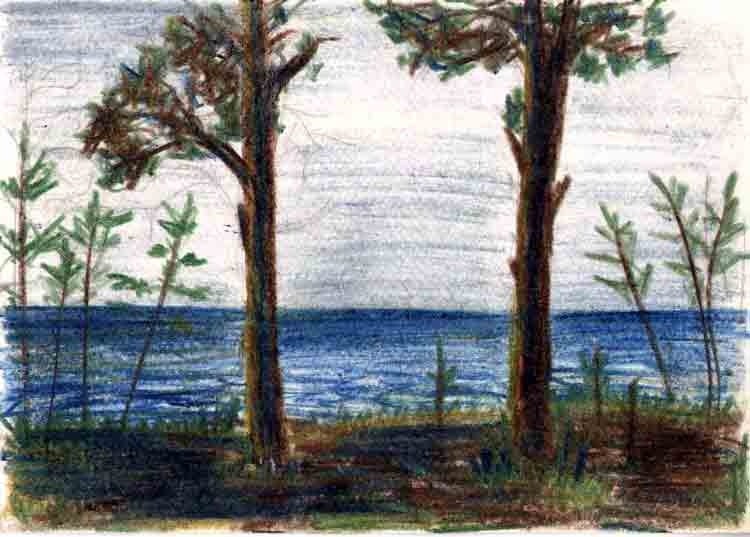 Pines on the shore of the Finnish Gulf. 1997. Anatolkin