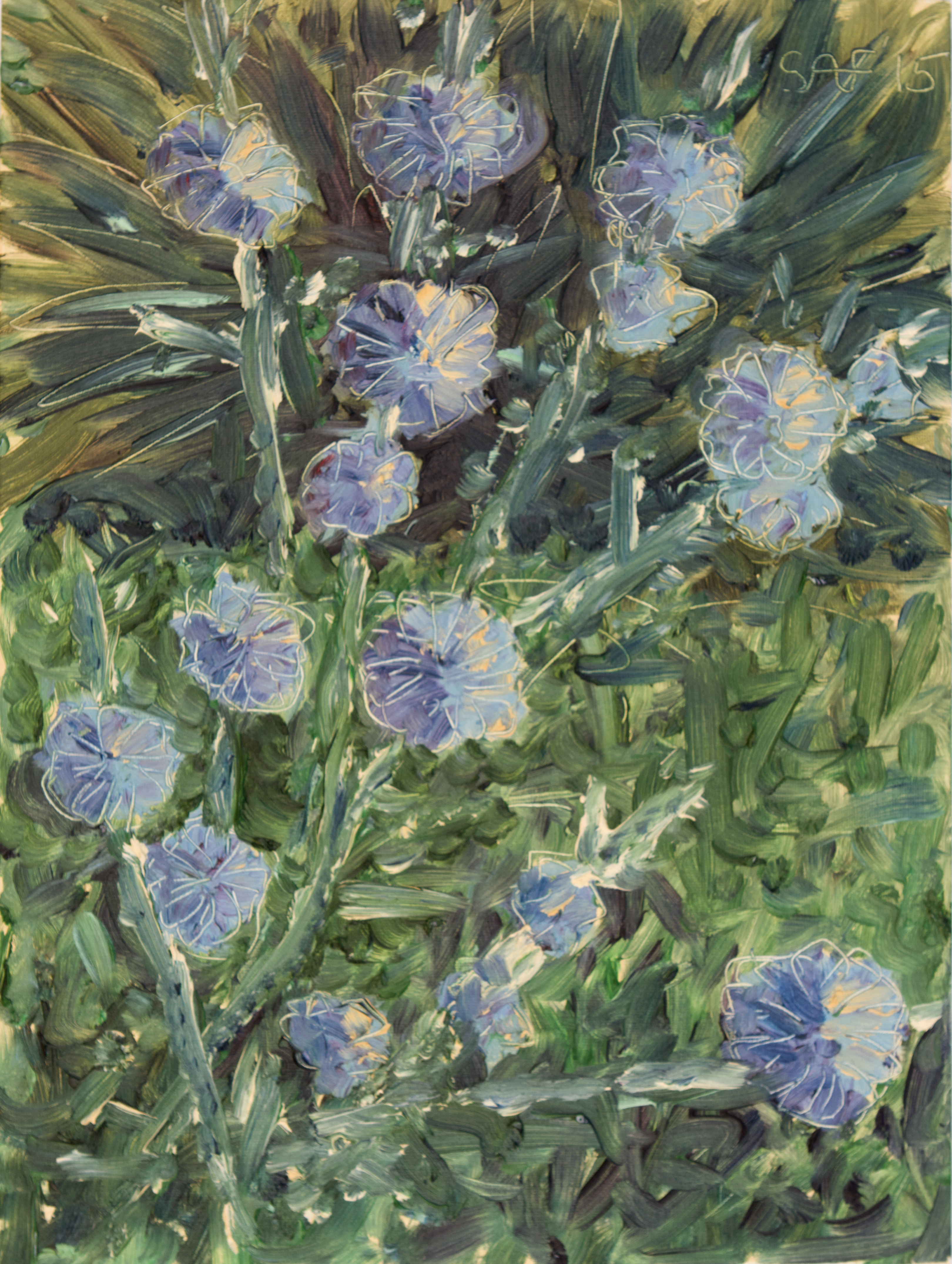 The blooming chicory. 2015. Anatolkin